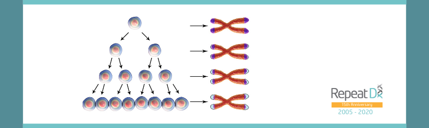 What is telomerase?